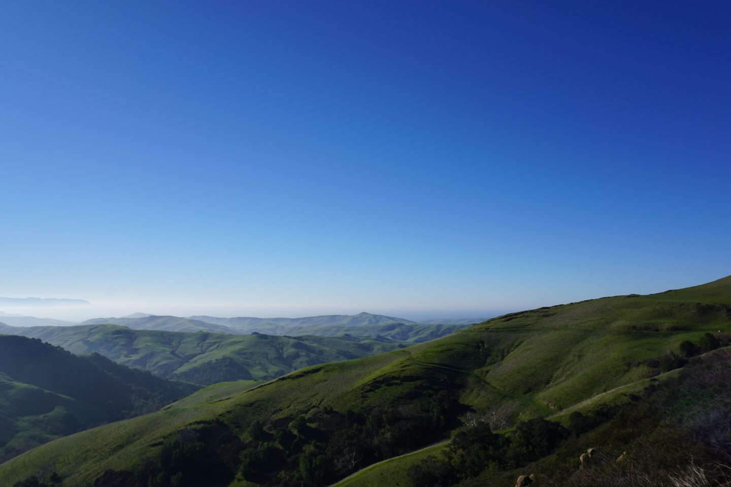 Cali Dreaming : A Day in Paso Robles