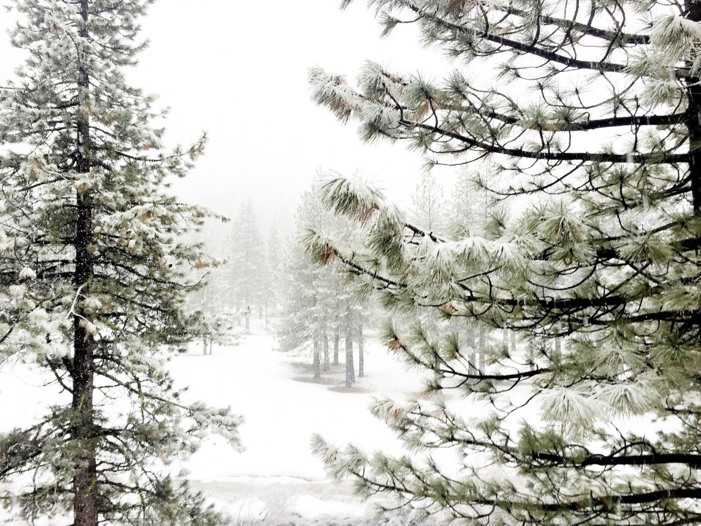 Lake Tahoe : Winter Wonderland