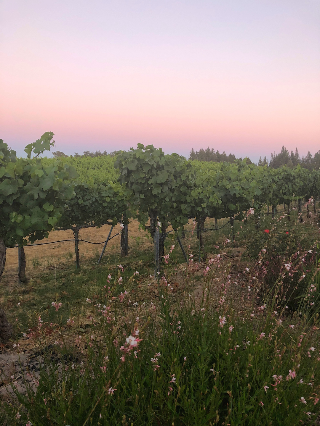 A Weekend in Sonoma County : A Delightful Alternative to Napa