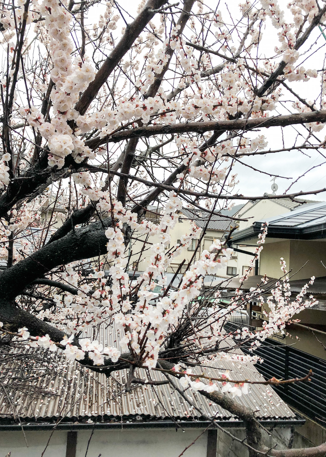 Her_Travel_Edit_Kyoto_Cherry_Blossoms