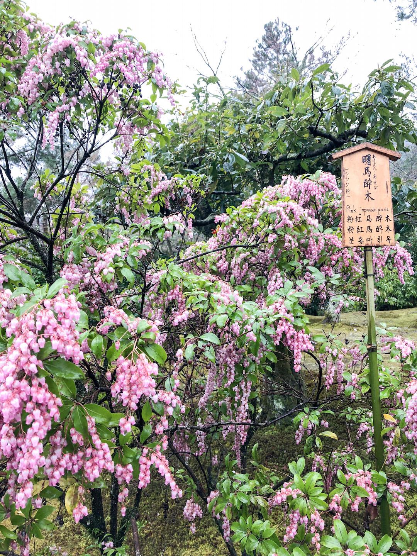 Her_Travel_Edit_Kyoto_Tenryuji_Garden