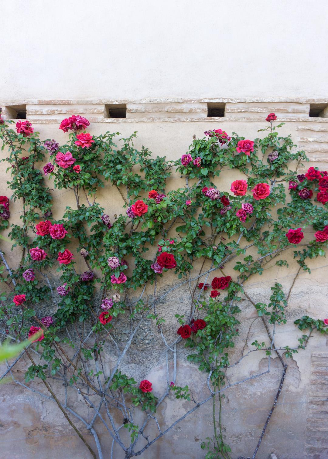 Her_Travel_Edit_Granada_Alhambra_Generalife_Garden_Roses