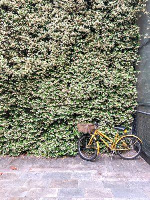 Cute Jasmine Covered Walls in Modena