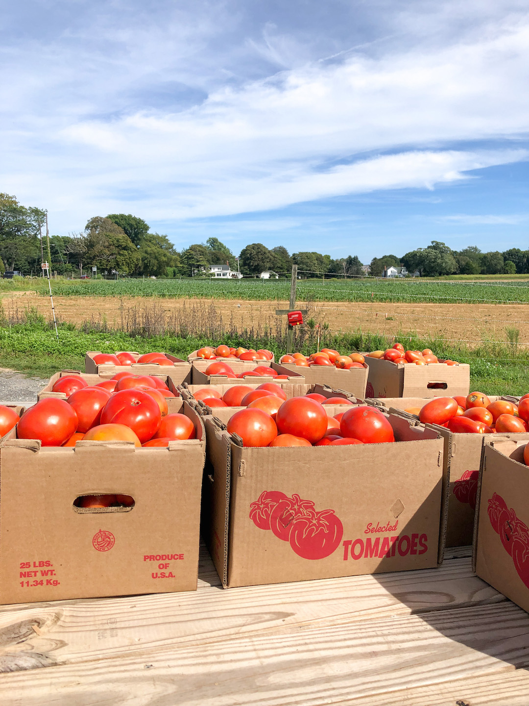 Latham Farms in the North Fork, Long Island