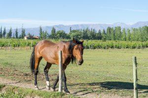 Argentine Horse at Casa Dolce Vita