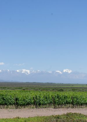 Andes Mountain views in the Valle de Uco