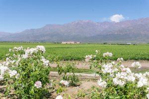 Clos de los Sietes Wineries in Valle de Uco