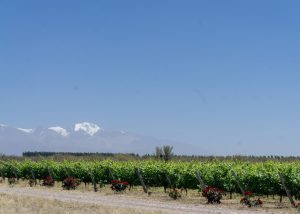Salentein Vineyards in the Valle de Uco