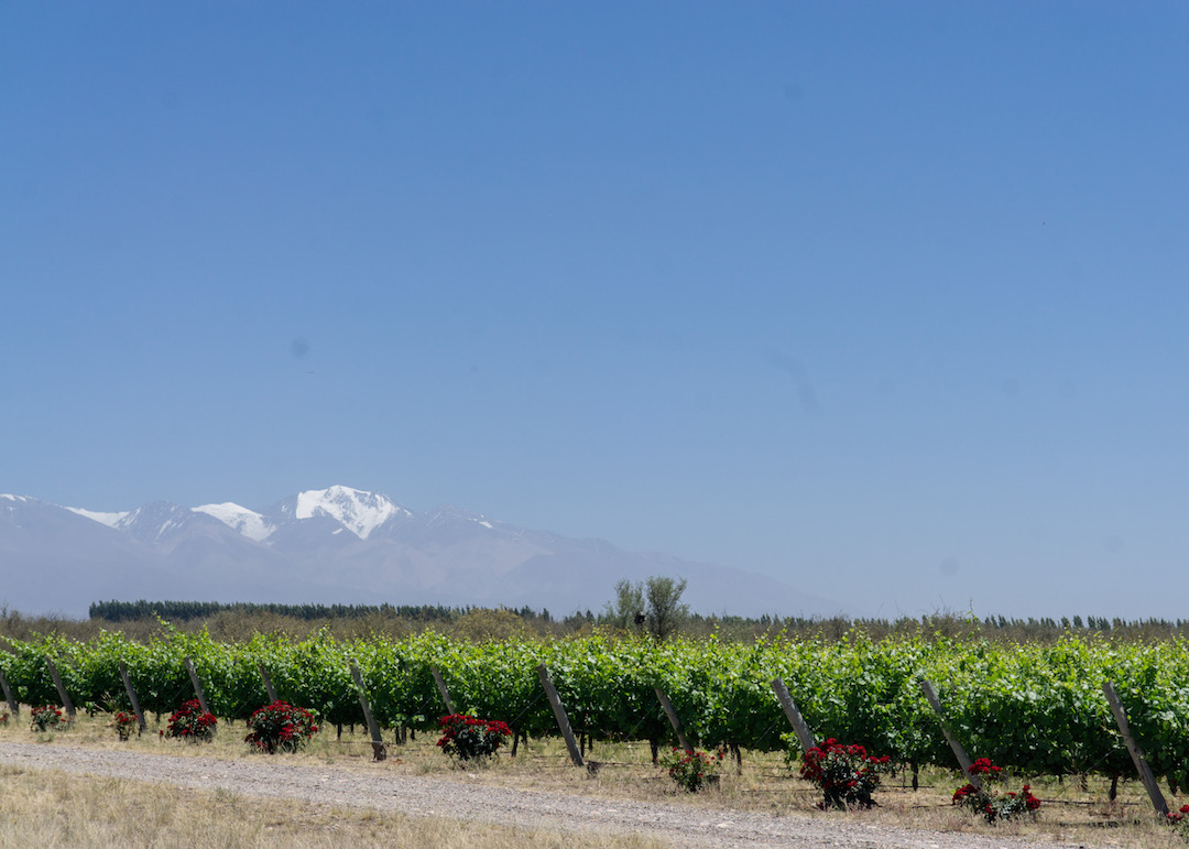 Her_Travel_Edit_Valle_de_Uco_Salentein_Vineyards
