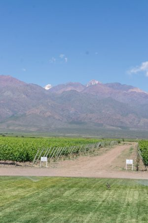 Wineries in the Valle de Uco