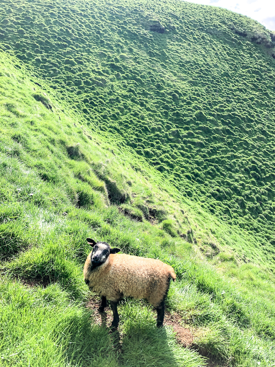 Her_Travel_Edit_Iceland_Icelandic_Sheep