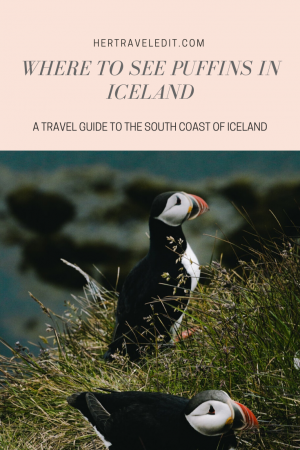 Where to see puffins in Iceland